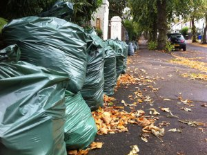 Green sacks