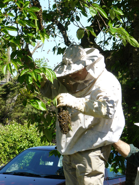John captures the bees