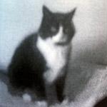 Max: went missing around Watt Lane
