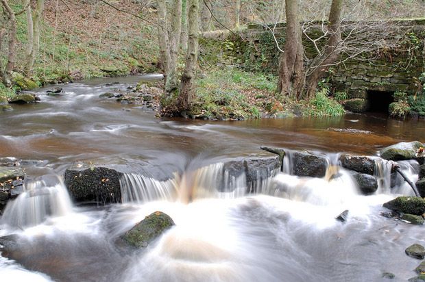 Rivelin valley : the local conservation group has won an award