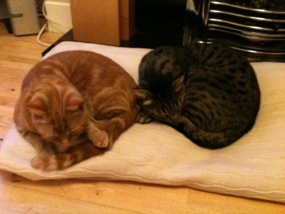 Have you seen ginger cat Lola (left)?