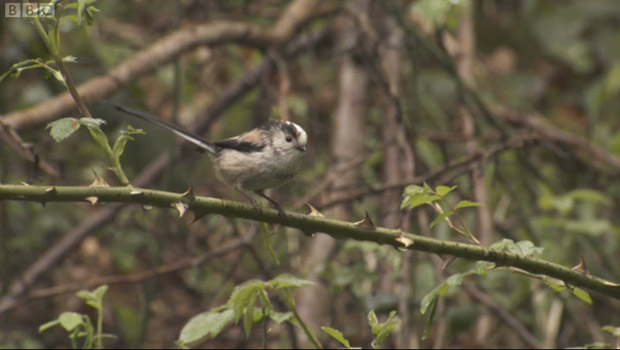 Rivelin Vally featured on BBC Springwatch show
