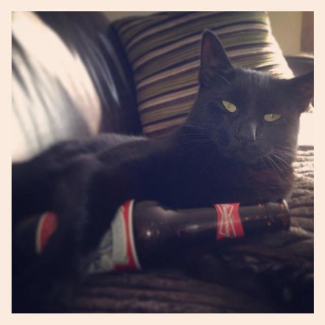 Have you seen Alfie the Cairns Road cat?