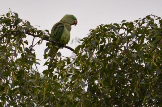 A parrot was spotted today on Stephen DriveA parrot was spotted today on Stephen Drive