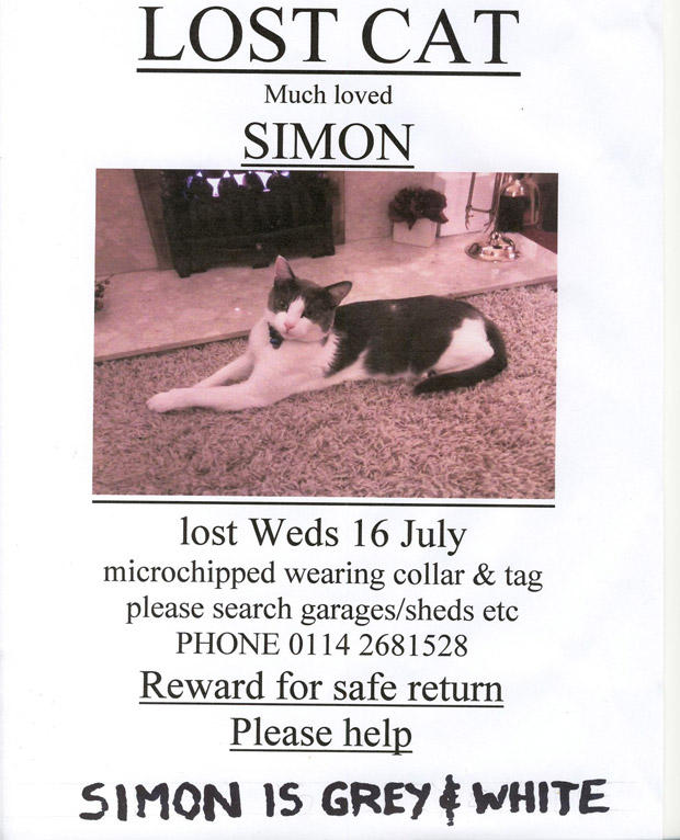 Have you seen Simon the cat?