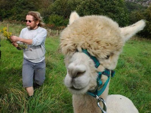 Crosspool alpacas