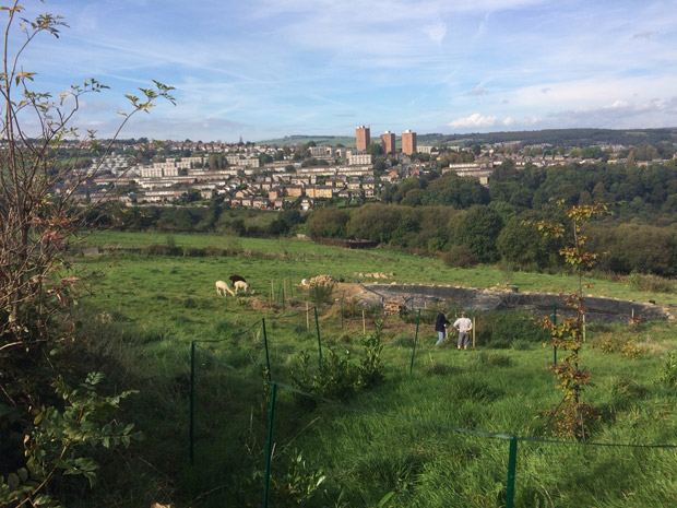 Crosspool alpacas on Holly Hagg