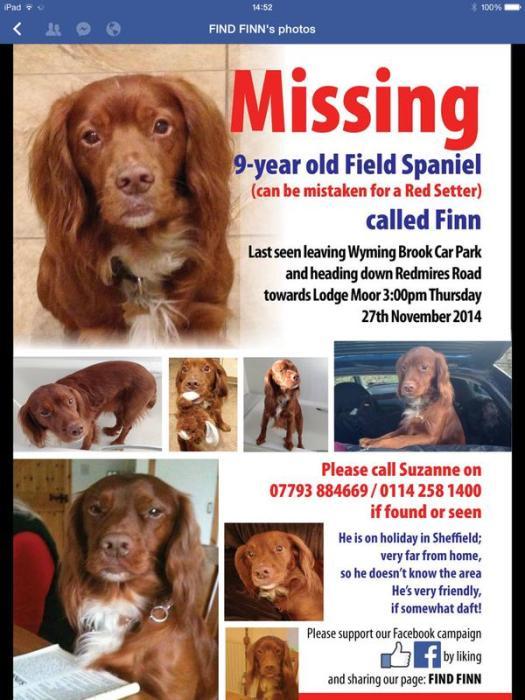Help find Finn