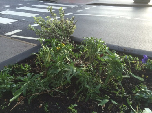 The damaged planter with damaged shrub