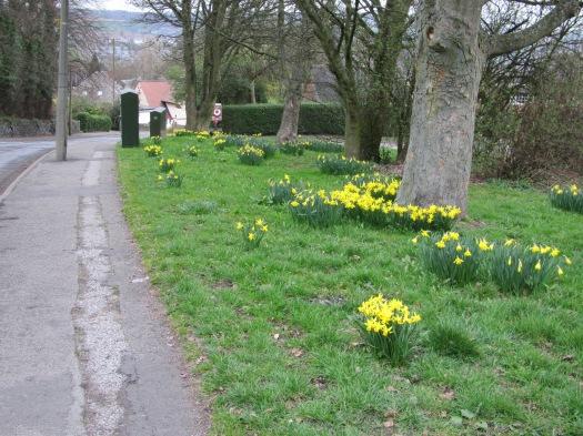 Spring on Moorbank Coldwell